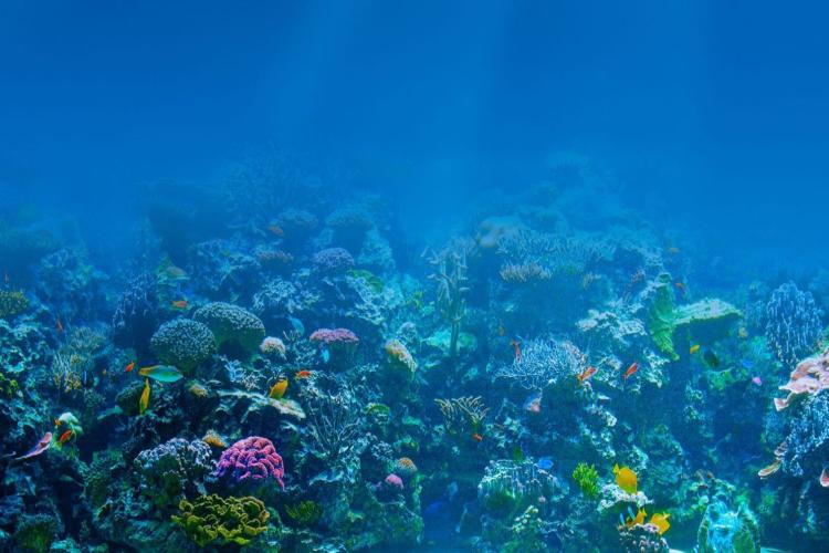 Día Mundial de los Océanos / Foto Cortesía