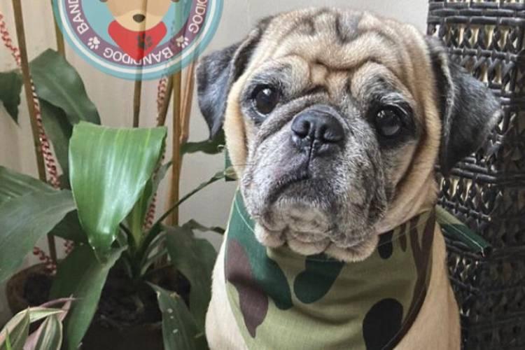 Bandidog, un emprendimiento para caninos. Foto: Cortesía