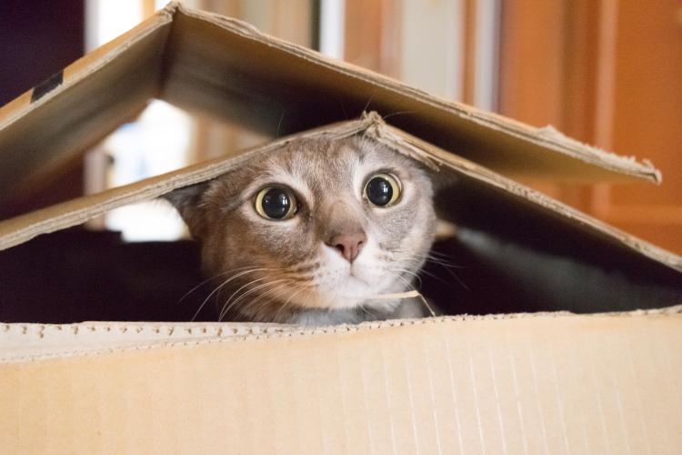 Día Internacional del gato / Foto Cortesía