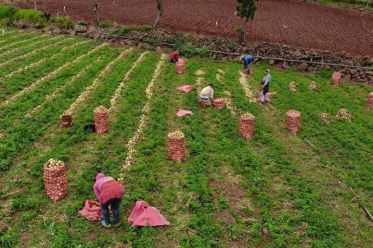 Productores agrícolas Táchira