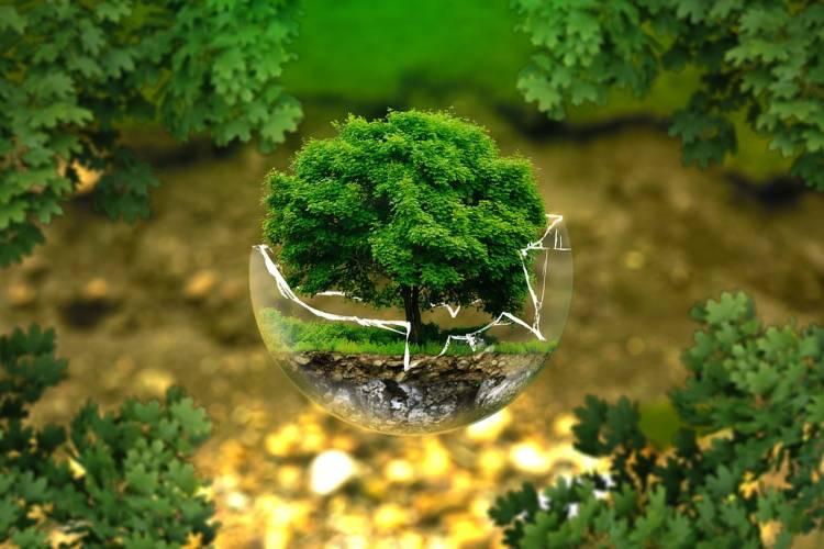 Día Mundial de la Protección de la Naturaleza.