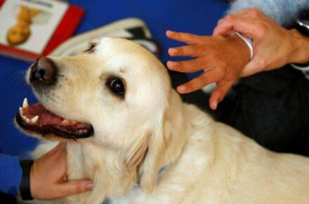 Perro ayuda a niños en España en medio de la pandemia. Foto: Reuters