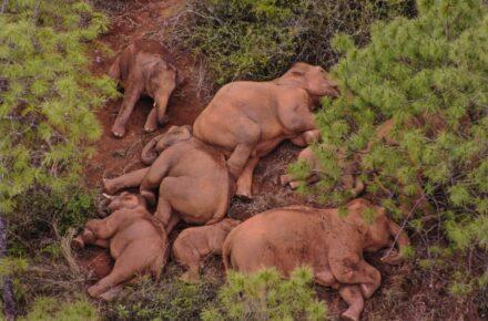Elefantes en China. Xinhua