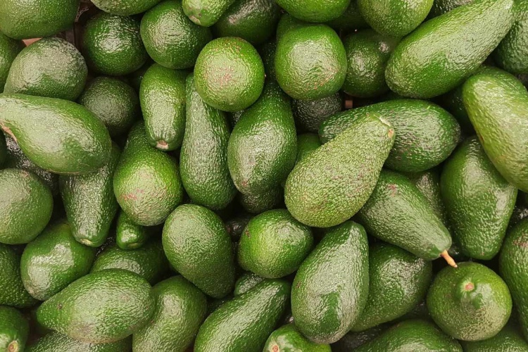 aguacate 3