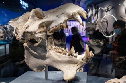 fósil de dinosaurio en China