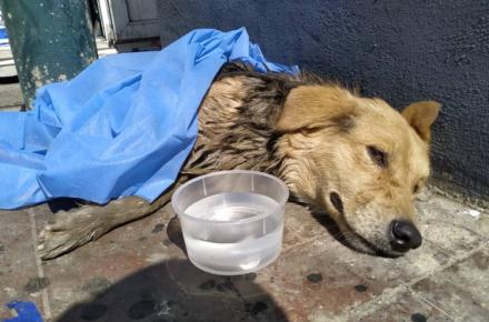 Paramédicos viales rescataron a un perro en el Guaire